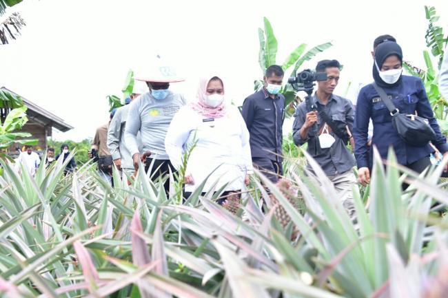 Bupati Kasmarni Launching Nenas Menjadi Produk Unggulan dan Apresiasi BUMDes Desa Kuala Alam